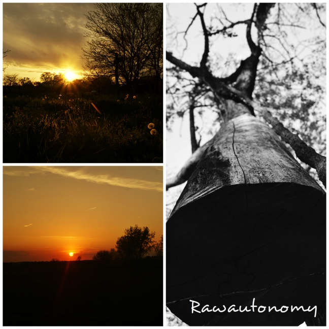 Top left - first DR sunset, Bottom left - train view, Right - tree @ Sandhill.